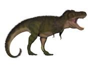 Tyranosaurus Rex, a carnivore of the Cretaceous Period