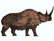 Woolly Rhinoceros, an extinct mammal from the Pleistocene Period