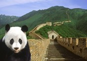 Panda at the Great Wall of China