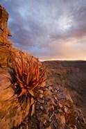 Namibia, Fish River Canyon National Park, close up of adesert plant