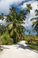 Seychelles, La Digue, Palm lined country path