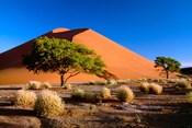 Trees with Sossosvlei Dunes, Namib-Naukluff Park, Namibia