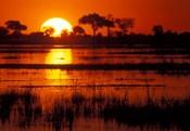 Setting Sun over Lush Banks, Chobe National Park, Botswana