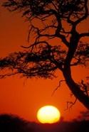 Silhouetted Tree Branches, Kalahari Desert, Kgalagadi Transfrontier Park, South Africa