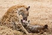 Tanzania, Ngorongoro Conservation Area, Spotted hyena