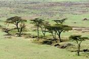 The Bush, Maasai Mara National Reserve, Kenya