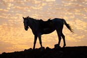 Sunrise and Silhouette of Horse and rider on the Giza Plateau, Cairo, Egypt