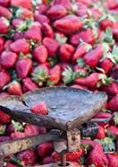 Strawberries for sale in Fes medina, Morocco