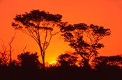 Trees Silhouetted by Dramatic Sunset, South Africa