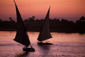 Traditional Feluccas Set Sail on the Nile River, Egypt
