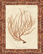 Gorgonia Miniacea Marble