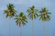 Coconut trees in Backwaters, Kerala, India