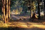 Rural Road, Kanha National Park, India