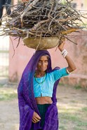 Woman Carrying Firewood on Head in Jungle of Ranthambore National Park, Rajasthan, India