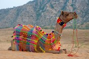 Brightly decorated camel, Pushkar, Rajasthan, India.