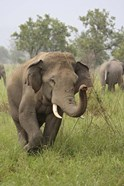 Elephant Greeting, Corbett National Park, Uttaranchal, India