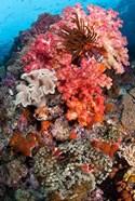 Coral, Raja Ampat, Papua, Indonesia