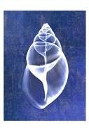 Achatina Shell (indigo)