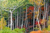 Fall colors of the Fuji-Hakone-Izu National Park, Japan