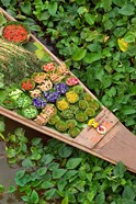 Detail of Boat in Water Lilies, Floating Market, Bangkok, Thailand
