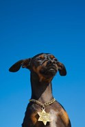 Israel, Tel Aviv, Dog, Jewish Star of David medallion
