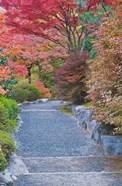 Tenryuji Temple Garden, Sagano, Arashiyama, Kyoto, Japan
