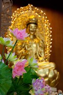 Pink lotus flowers in front of gold statue, Kek Lok Si Temple, Island of Penang, Malaysia