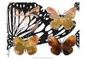 Layered Butterflies III