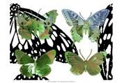 Layered Butterflies V
