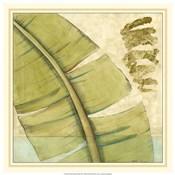 Peacock Palm III