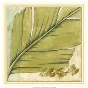 Peacock Palm IV