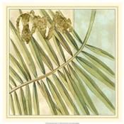 Peacock Palm VI