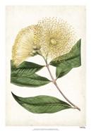 Floral Lace I