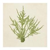 Chromatic Seaweed VII