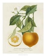 French Orange Botanical I