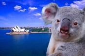 Portrayal of Opera House and Koala, Sydney, Australia