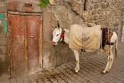 Donkey and Cobbled Streets, Mardin, Turkey