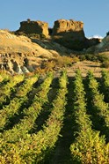 Mt Difficulty Vineyard and Historic Sluicings, Bannockburn, South Island, New Zealand
