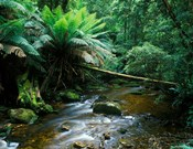 Nelson Creek, Franklin Gordon Wild Rivers National Park, Tasmania, Australia
