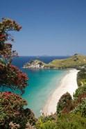 Pohutukawa Tree, Beach, North Island, New Zealand
