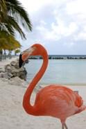 Pink Flamingo on Renaissance Island, Aruba, Caribbean