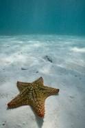 Bahamas, Marine Life, Sea star, Golden Rock Beach