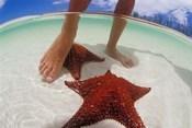 Starfish and Feet, Bahamas, Caribbean