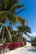 Bahamas, Eleuthera, Harbor Island, Dunmore, Flora