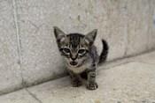 Cute kitten on the streets of Old Havana, Havana, Cuba