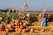 Scarecrows, Fruitland, Idaho