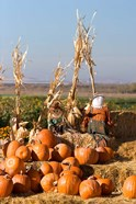 Pumpkin, hay bales, scarecrows, Fruitland, Idaho
