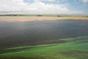 Brazil, Amazon River, Santarem Meeting of the Waters Algae bloom
