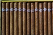 Cuba, Pinar del Rio Province, Cuban Cigars Art Print image