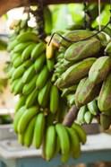 Cuba, Vinales, El Jardin de Caridad, Bananas